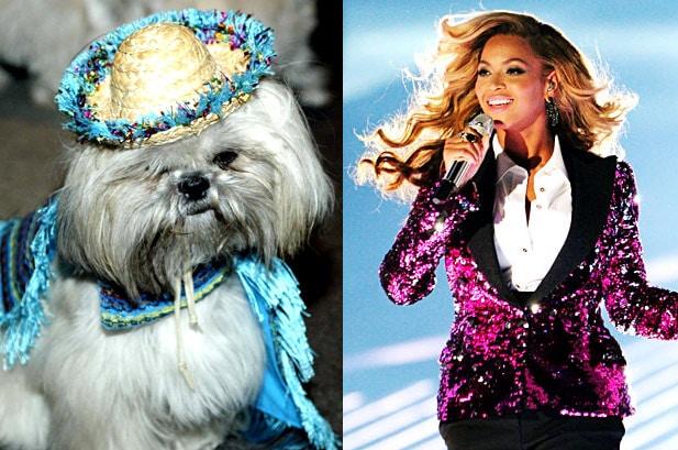 Photo of I cani preferiscono Beyoncè a Mozart: lo rivela uno studio scientifico