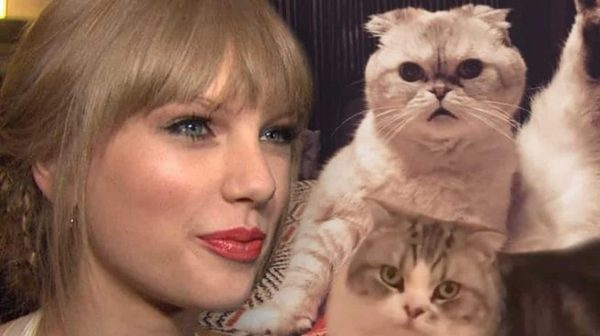 Taylor Cats