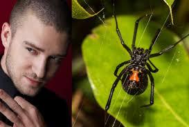 jt fobia dei ragni