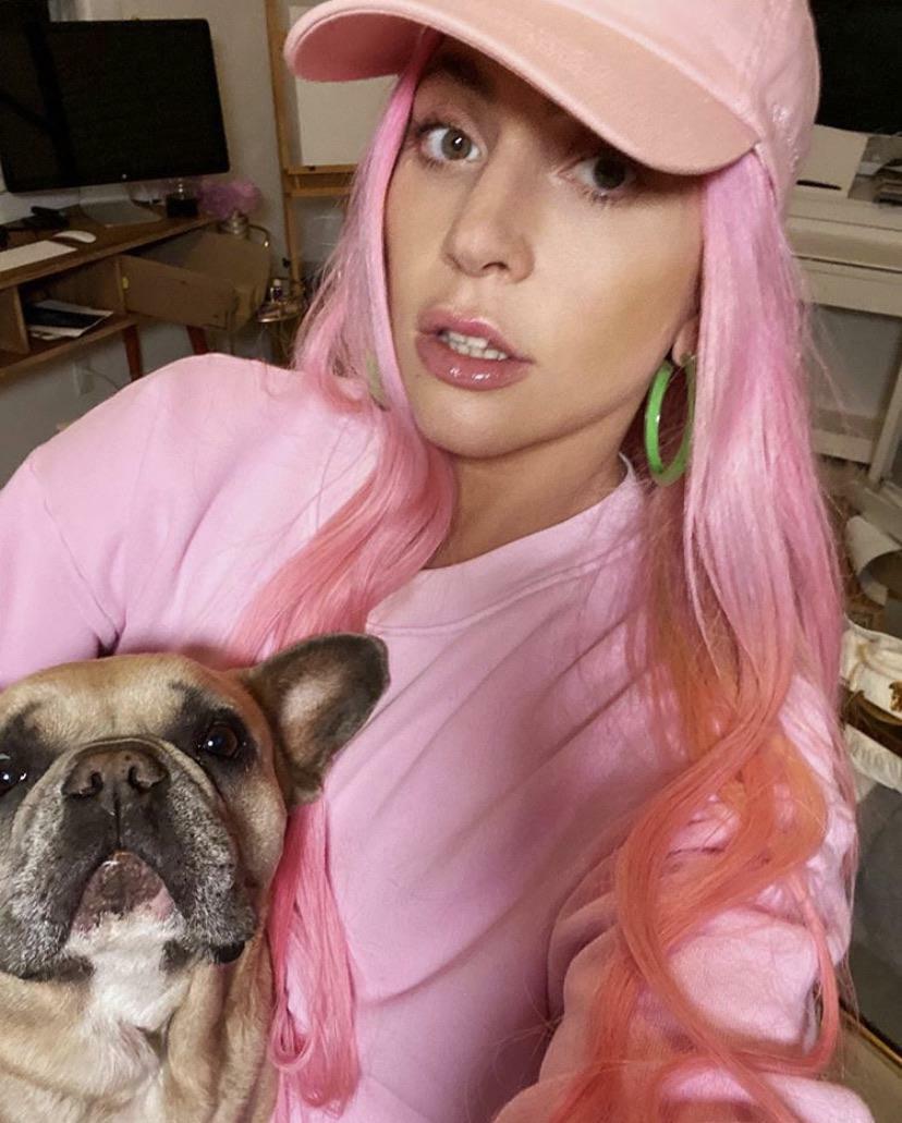 Lady Gaga cani rapiti